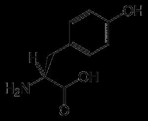 L-tyrosine-skeletal
